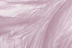Beautiful violet - mauve mist colors tone feather texture background, trends color