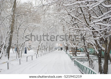 beautiful winter yard #521941219