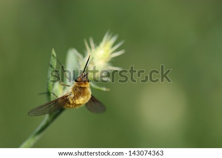 Wasps, bees and flies