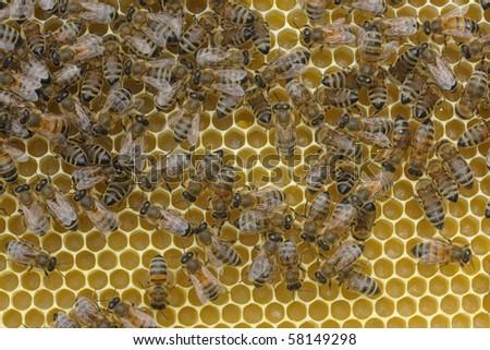 bees working on their hive