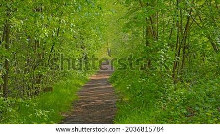 `Bels lijntje, famous hiking path along a fresh green spring forest in Turnhoutse Vennen nature reserve, Flanders, Belgium. Stock fotó ©