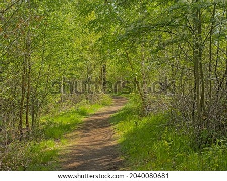 `Bels lijntje`, famous hiking path along a fresh green spring forest in Turnhoutse Vennen nature reserve, Flanders, Belgium. Stock fotó ©