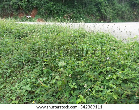 Big, Small, Tiny Giant Butterfly and Flies flying on Green Grasses on the Road Sides and Mountain  #542389111