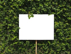 Billboards with leaves