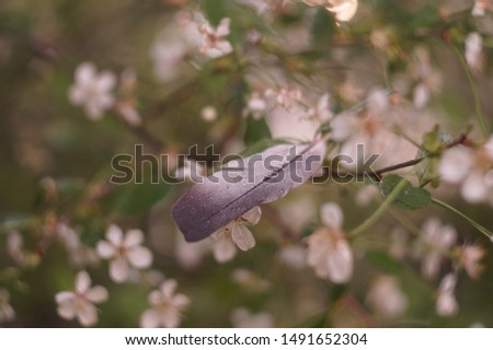 bird feather on a cherry branch