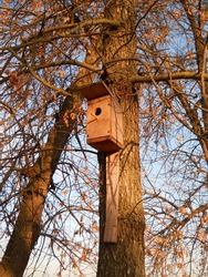 Birdhouse for birds on a tree without leaves.