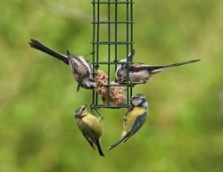 Birds feeding on a bird feeder