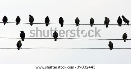 Birds sitting in line on a telephone line