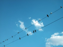 birds sitting on power lines over clear sky