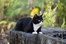 ฺBlack cat sitting on the block bricks with green background