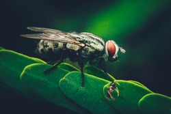 Black flies perched on the leaves