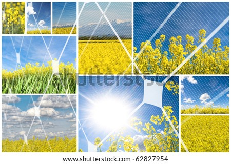 Blooming rapeseed with photovoltaic panel