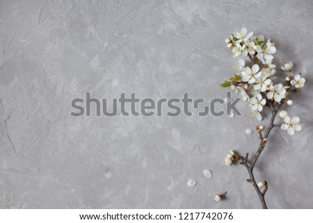 Blossom cherry plum on a gray background gypsum plaster