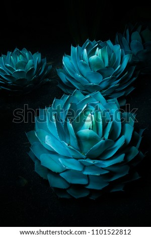 3 blue agave plants lit up at night