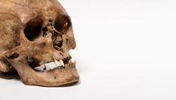 bones anatomie human Skull with white background