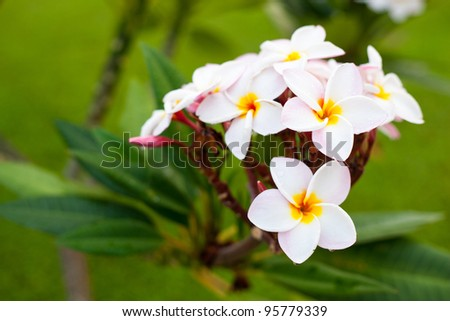 bouquet of white flowers, white flowers blossoming on the trees.