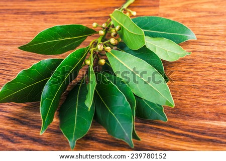 branches  of laurel  leaves   on a  brown wooden board