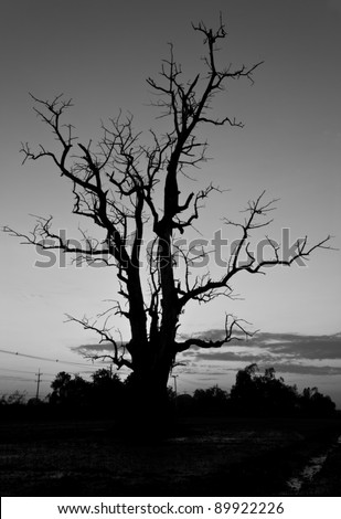 Branches of the tree was dead when the sunset is seen as a scary black.