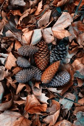brown leaves and pinecones in autumn season