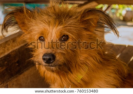 ?Brown puppy ,face dog be thinking #760153480
