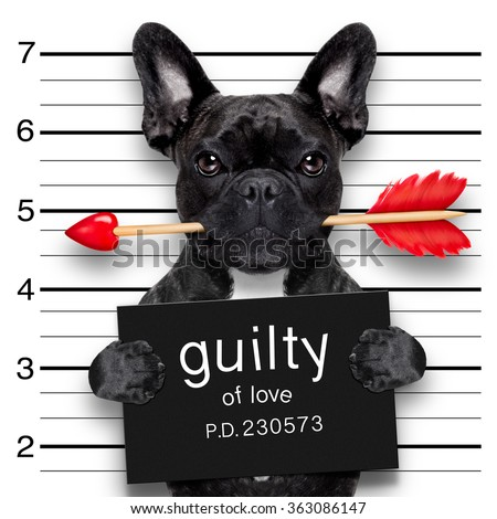 bulldog  dog with rose in mouth as a mugshot guilty for love