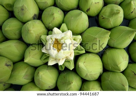 ?Bunch of Lotus flowers for Buddhist prayer