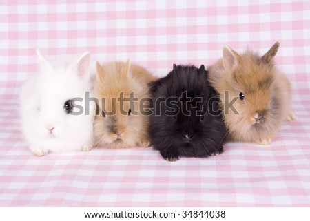 4 bunny's next to each other