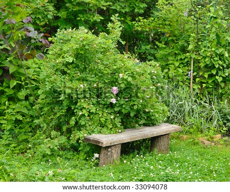 bush of garden roses over old wood bench