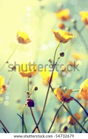 buttercup. yellow flower #54732679