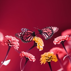 Butterflies and pink yellow  flowers on a bright red background. Summer spring image. Free space for text. Square format.