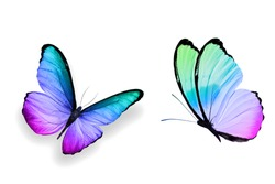 butterflies on a white background. isolates for design. colored insects.