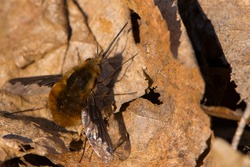buzzing sits on dry leaves