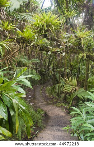 Caribbean National Forest El Yunque. Tropical rain forest. Puerto Rico