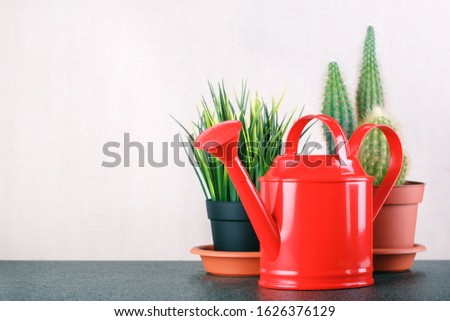 Caring for indoor plants. Indoor Plan and tool on table with copy space.