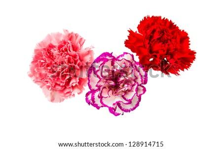 carnation isolated on white background #128914715