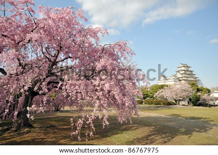 Castle of Himeji with spring cherry blossoms .Japan-1-2