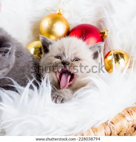 cat kitten kitty christmas toy gift present