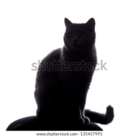 cat silhouette sitting on white