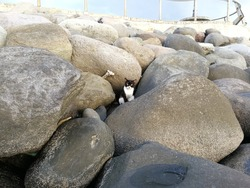 Cat sitting among some rocks