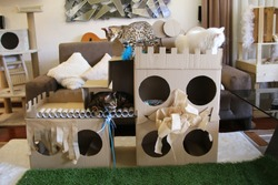 Cats cardboard boxes playing time