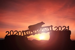 2021 chinese Year of the zodiac of cow concept, cow cross bidge from 2020 to 2021 Newyear Silhouette cow walk strong and brave to Happy new year 2021 which fertile with sunrise, sunset background