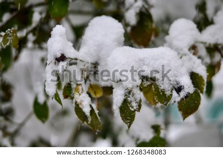 Close-up of snow-covered trees and branches on the background of a blizzard and blizzard with a soft rear angle #1268348083