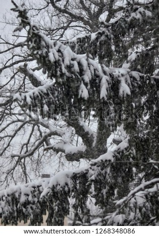 Close-up of snow-covered trees and branches on the background of a blizzard and blizzard with a soft rear angle #1268348086