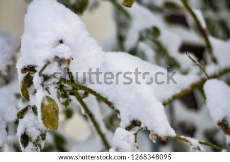 Close-up of snow-covered trees and branches on the background of a blizzard and blizzard with a soft rear angle #1268348095