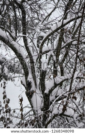 Close-up of snow-covered trees and branches on the background of a blizzard and blizzard with a soft rear angle #1268348098