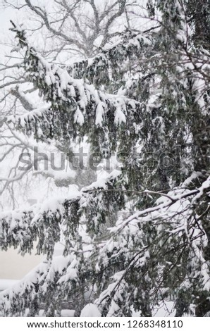 Close-up of snow-covered trees and branches on the background of a blizzard and blizzard with a soft rear angle #1268348110