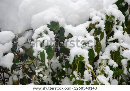 Close-up of snow-covered trees and branches on the background of a blizzard and blizzard with a soft rear angle #1268348143