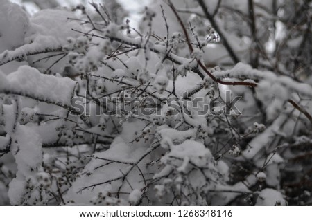 Close-up of snow-covered trees and branches on the background of a blizzard and blizzard with a soft rear angle #1268348146
