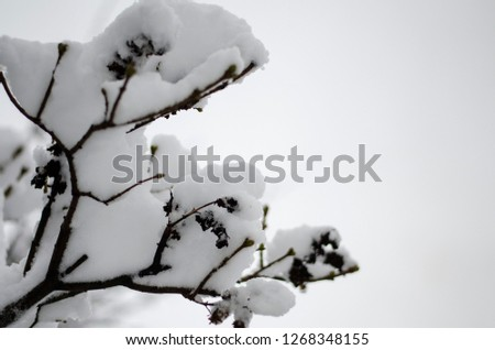 Close-up of snow-covered trees and branches on the background of a blizzard and blizzard with a soft rear angle #1268348155