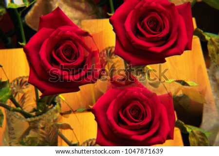 """Close-up of the red inflorescence of the rose """"Niccolo Paganini"""" with twisted petals in three sectional reflection standing in a crystal vase                               #1047871639"""